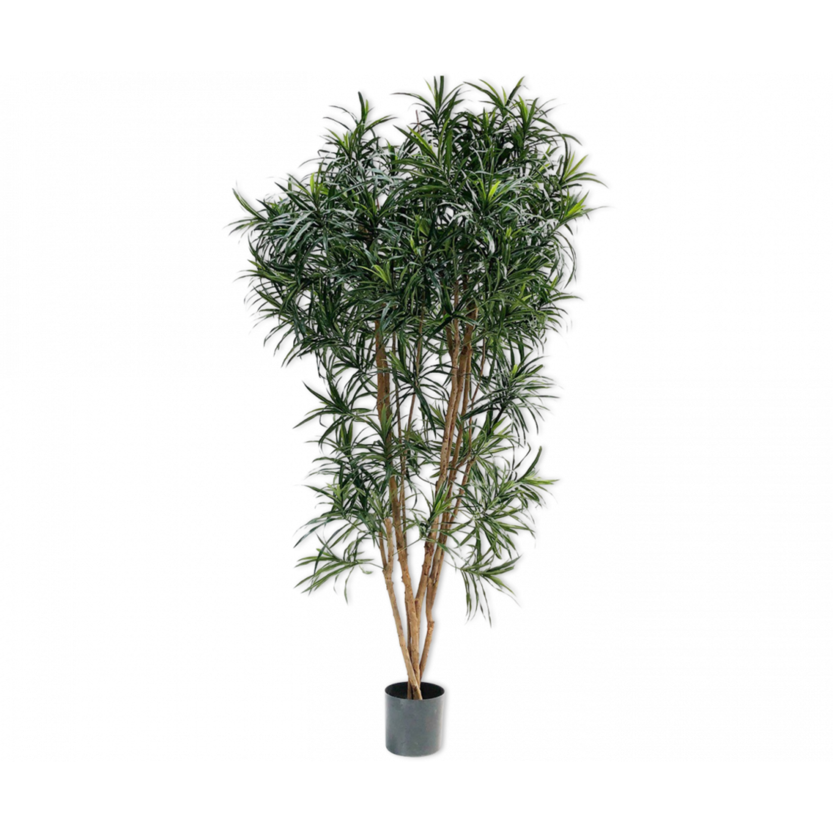Silk-ka Dracaena Green | 183 cm