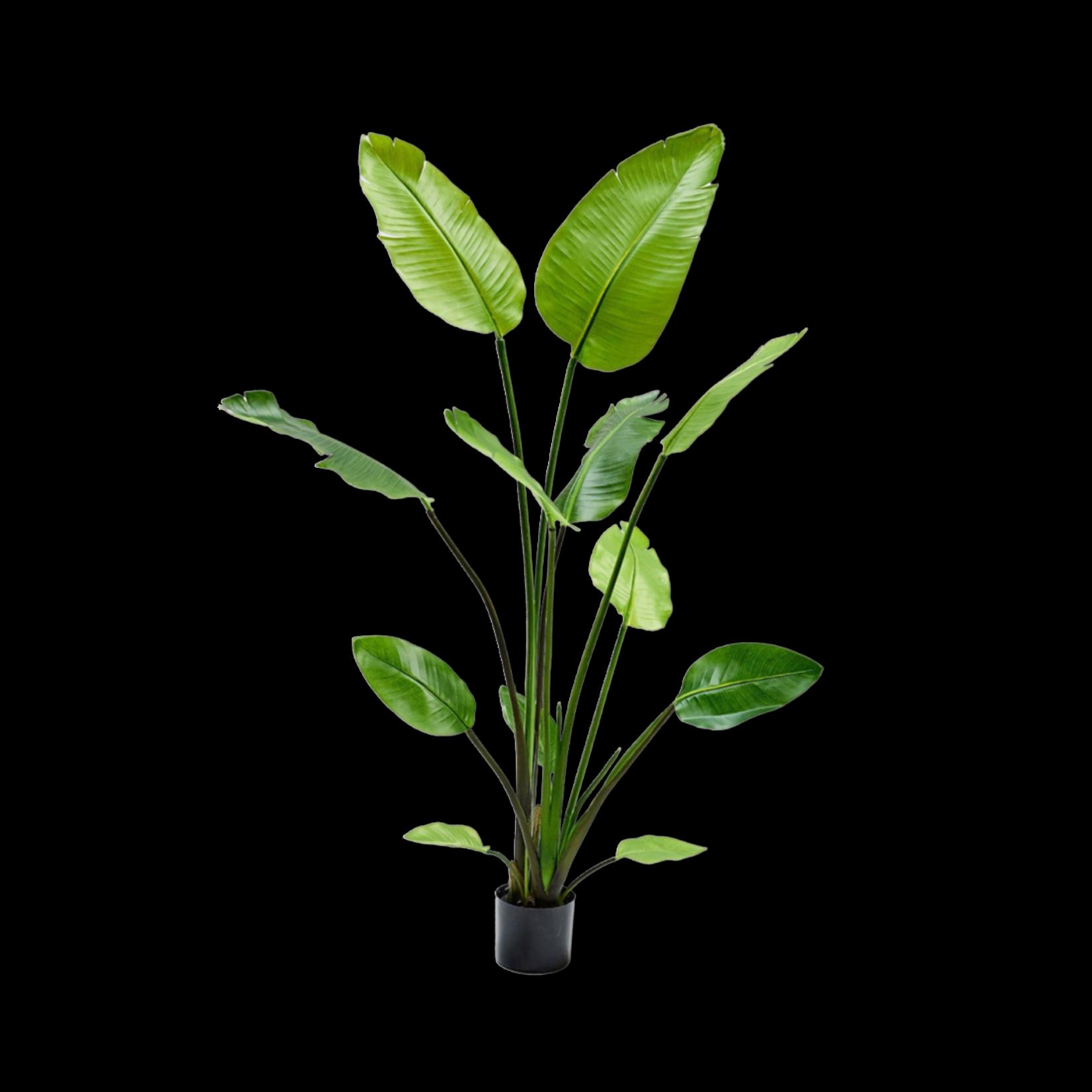 Silk-ka Vert Strelitzia | 150cm