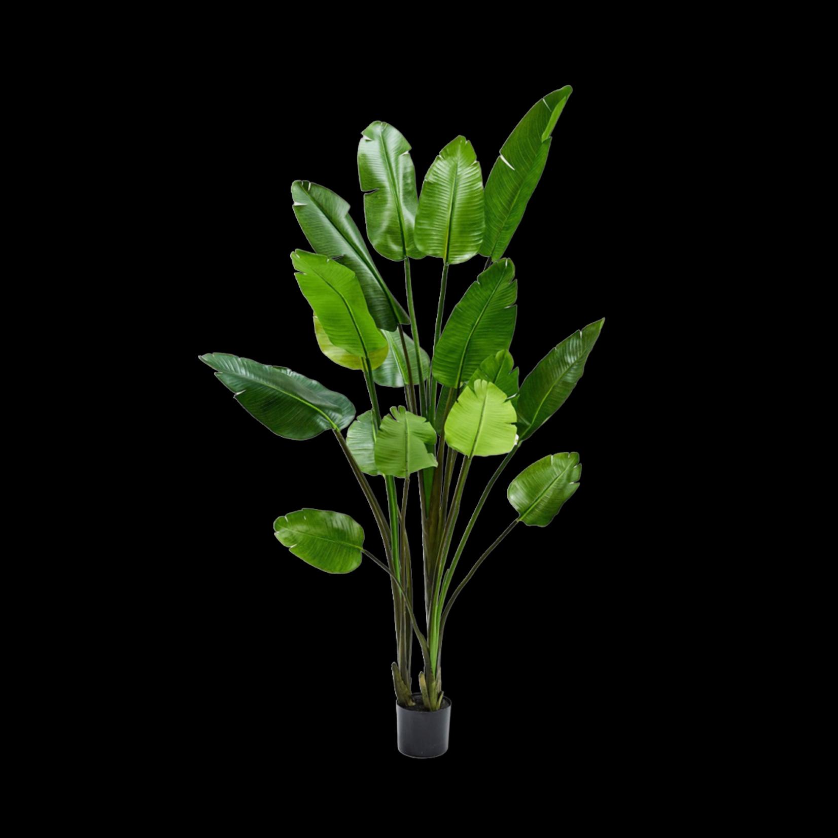 Silk-ka Strelitzia Groen | 243 cm