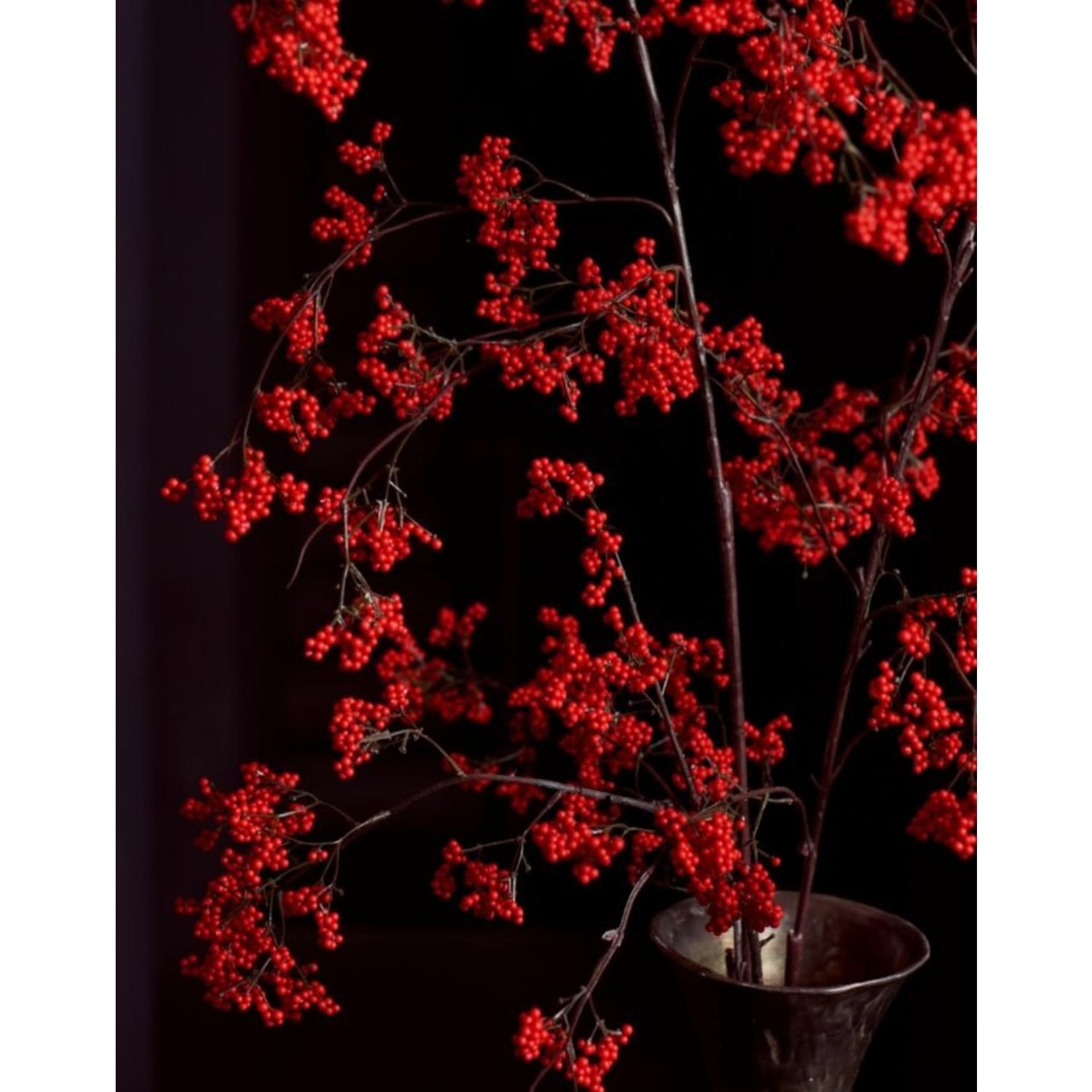 Silk-ka Bessentak Rood   137 cm