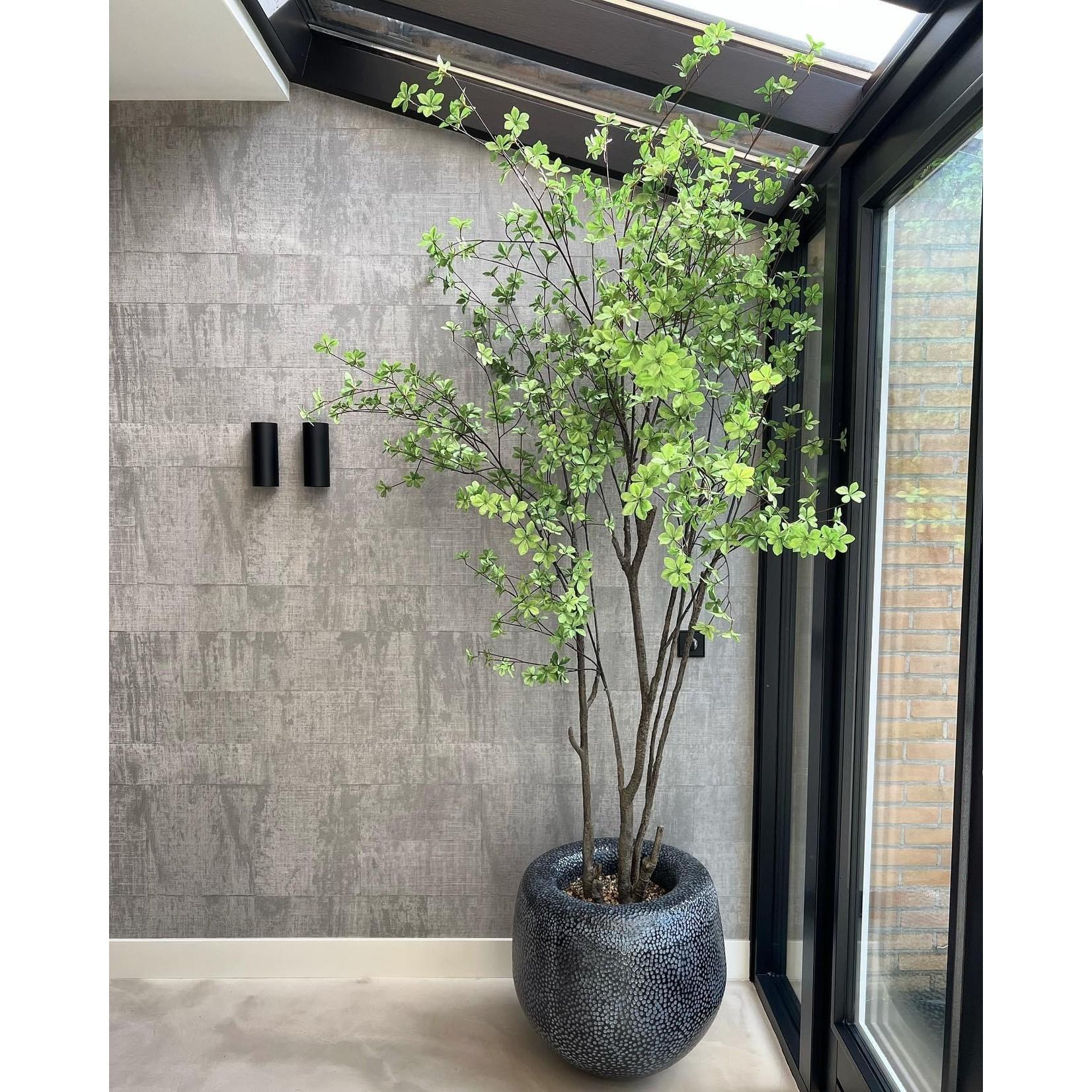 Silk-ka Tree Green | 244 cm