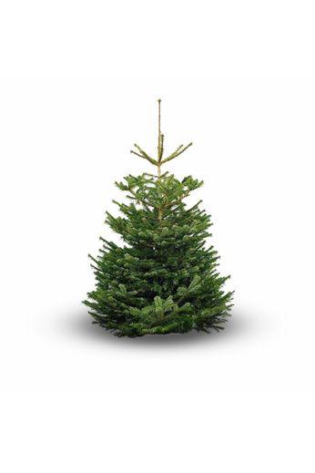 Nordmann Original Nordmann Christmas tree 150cm
