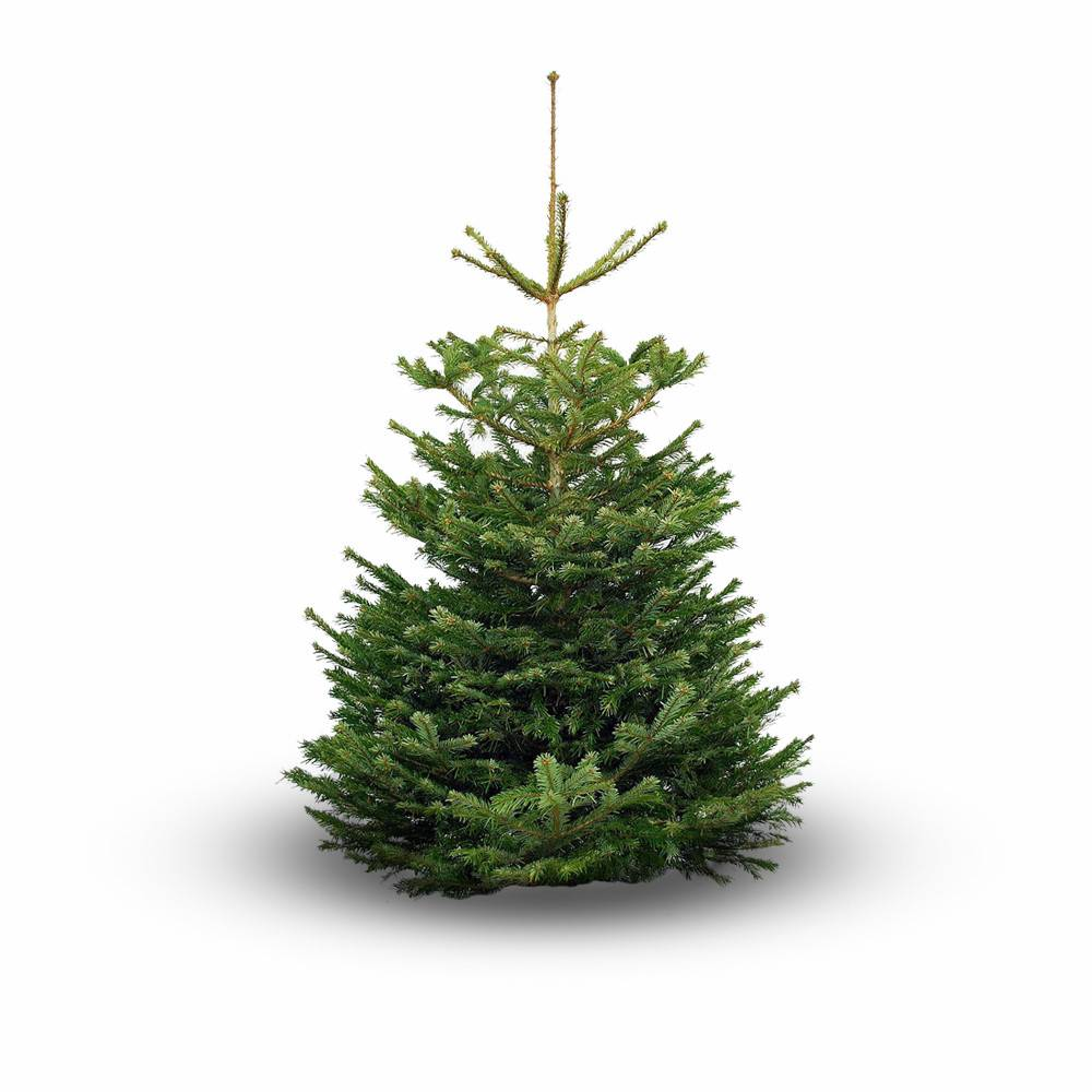 Nordmann kerstboom 150 cm - NU Puur & Groen
