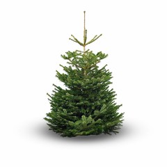 Nordmann Original Nordmann Christmas tree 175 cm / 200 cm