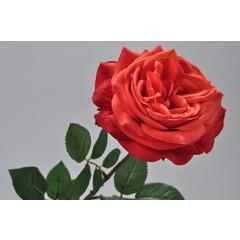 Silk-ka Roos met blad rood/oranje 70 cm