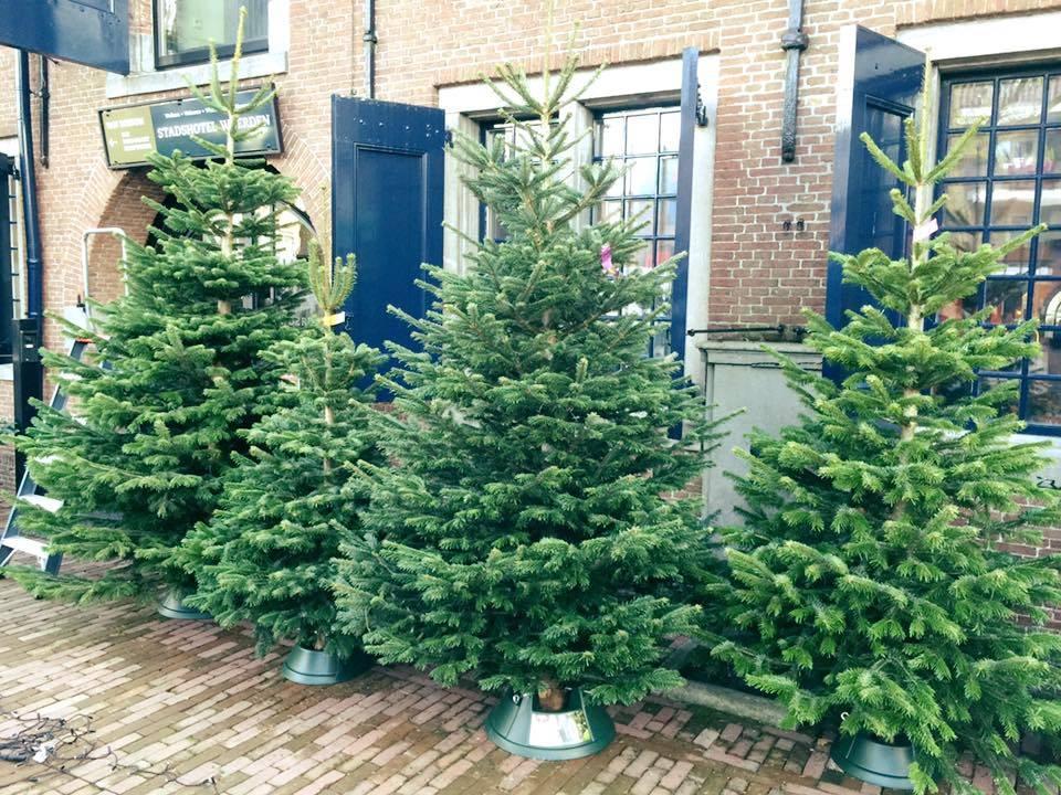 nordmann original nordmann christmas tree 150cm rh nupuurengroen nl christmas tree original name christmas tree originally pagan