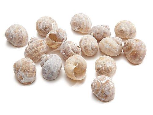 Land snail gold