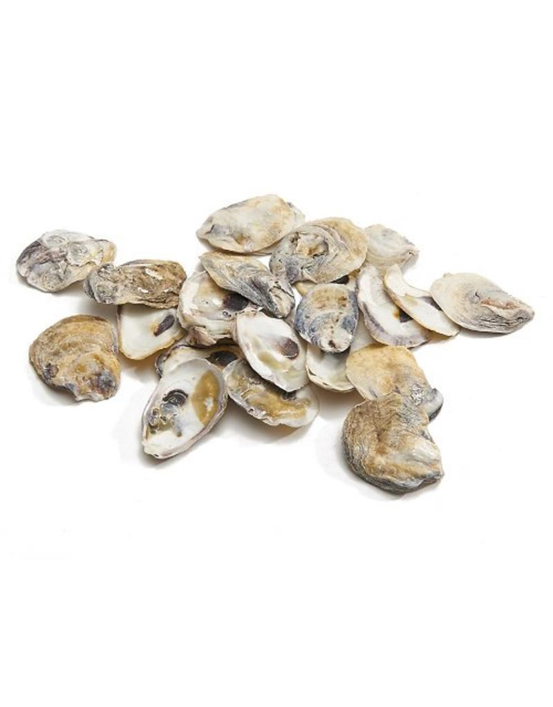 Talaba oyster shell
