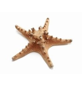 Starfish Philippine natural