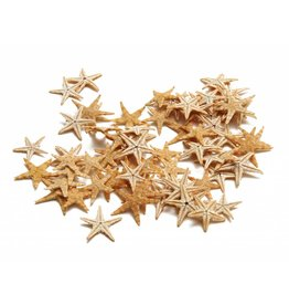 Starfish mini ± 2-3 cm