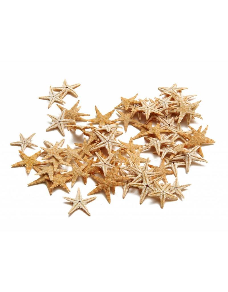 Starfish mini ± 2-3 cm