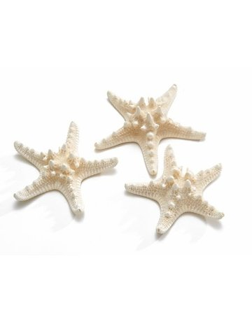 Philippine starfish bleached 10-15 cm