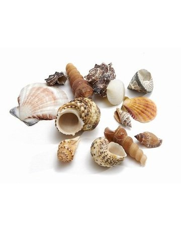 Shell mix large