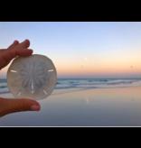 Sand Dollar Shell