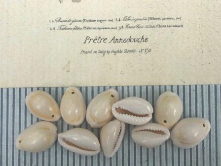 Kauri Beads