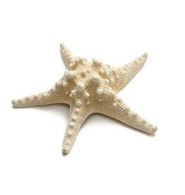 Starfish Philippine bleached