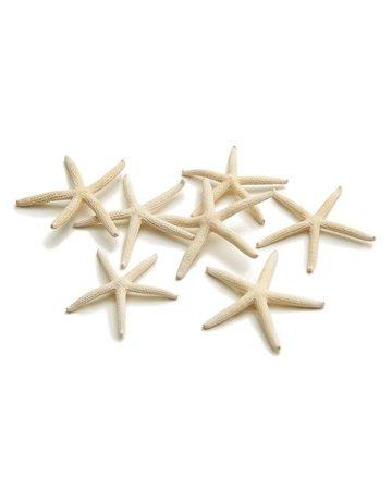 Zeester 5-7 cm wit