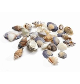 Shells mix small