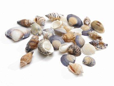 Shells mix small