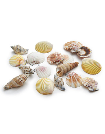 Shells mix medium