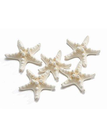Zeester Philippine 5-7 cm wit