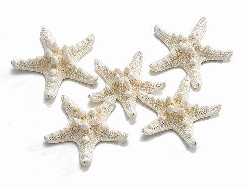 Philippine starfish 5-7 cm white