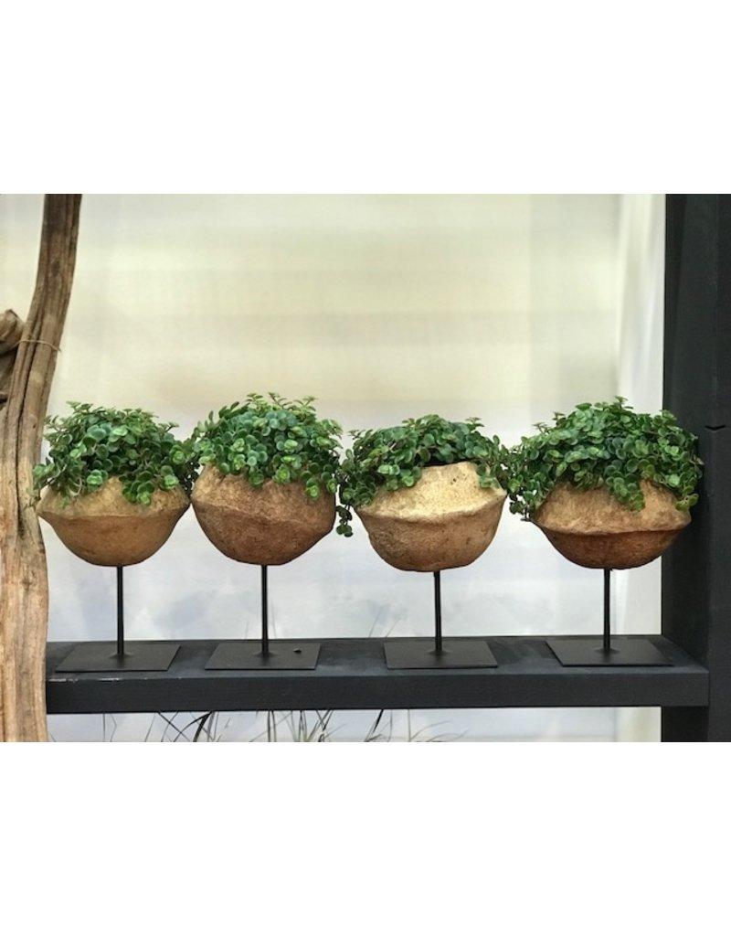 Sapucaia plantenbakje