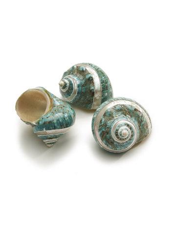 Burgos shell