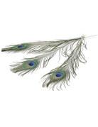 Peacocks Feathers