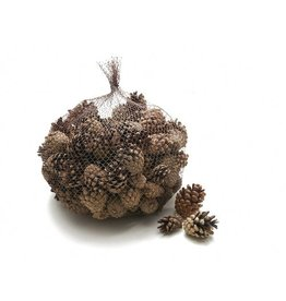 Pine cones Sylverster natural