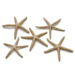 Starfish 10-15 cm gold