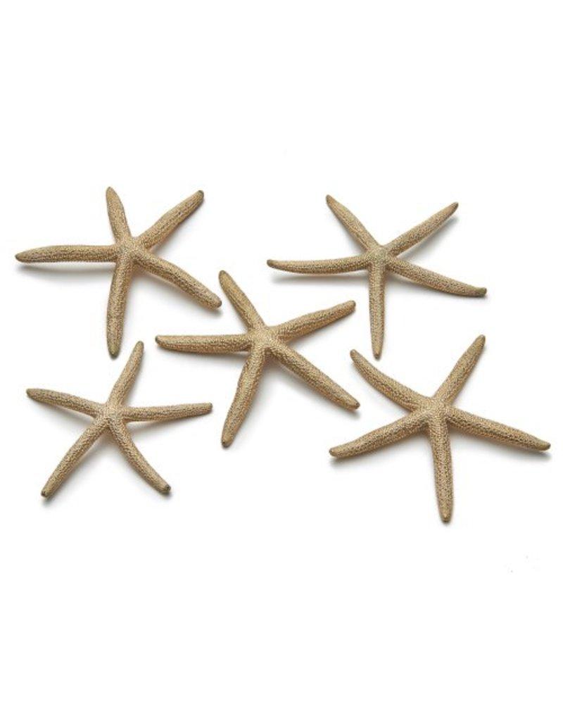 Zeester 10-15 cm goud