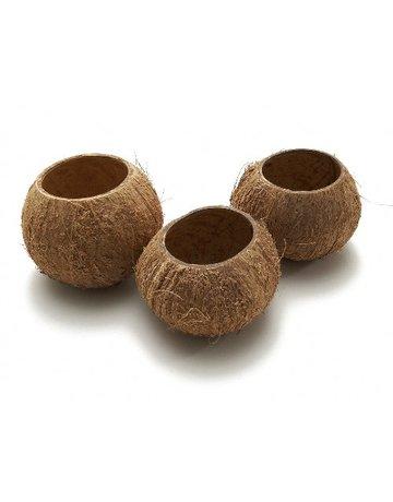 Cocos pot
