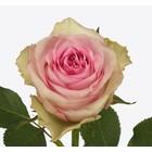 Roze roos grootbloemig per stuk