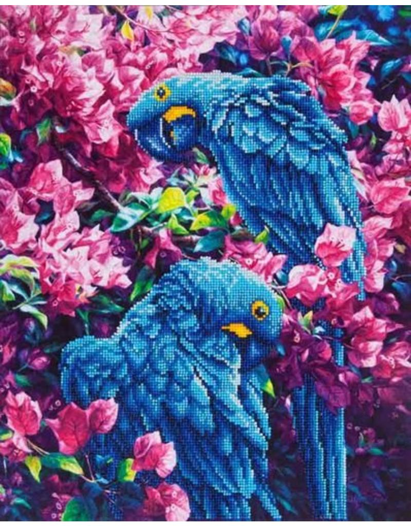 Diamond Dotz Diamond Painting pakket Blue parrots