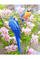 Schilderen op nummer Papegaaien