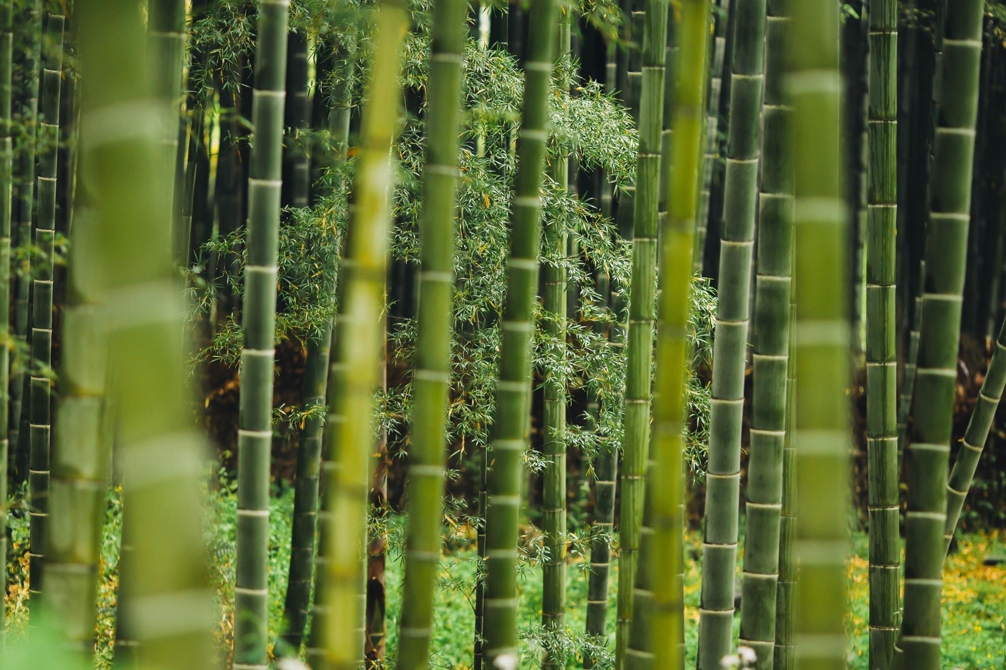 BORU Boru Bamboe enkelsokken - zwart