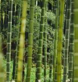BORU Boru Bamboe kousenvoetjes - zwart