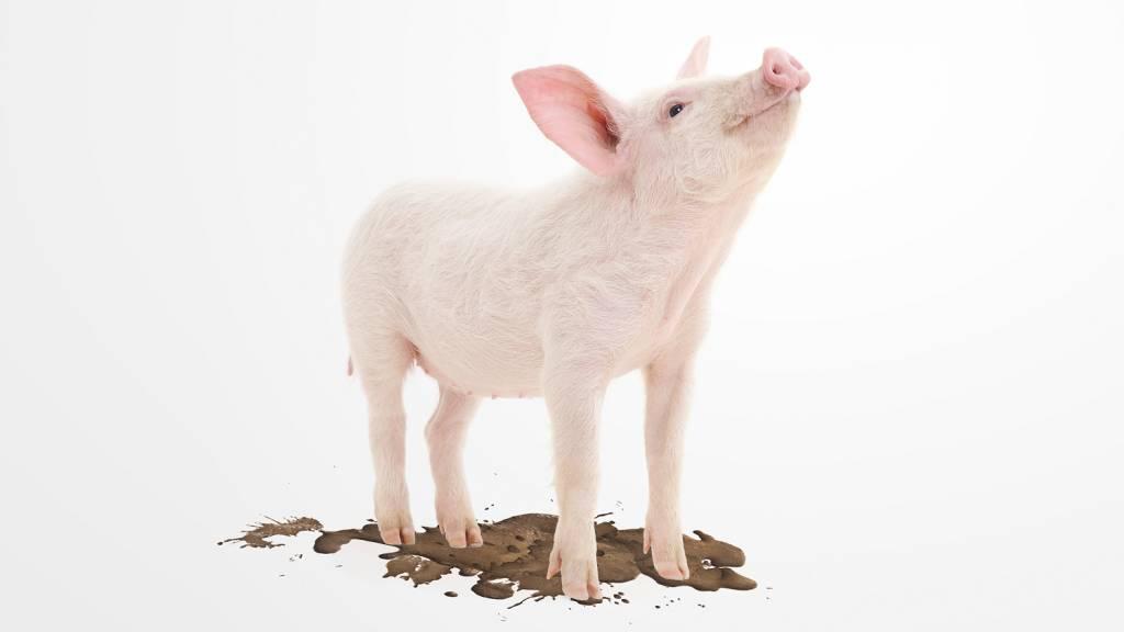 PIGGY PROOF Piggy Proof Premium Protector 01 - absorberende materialen