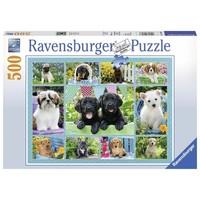 Puzzel Snoezige Hondjes 500 stukjes