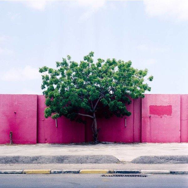 Kaspar Bossers Tree on Pink