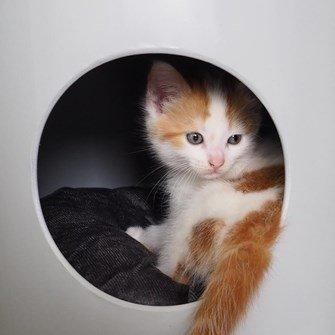 Slaaphuis kat BUCKET MONO licht grijs