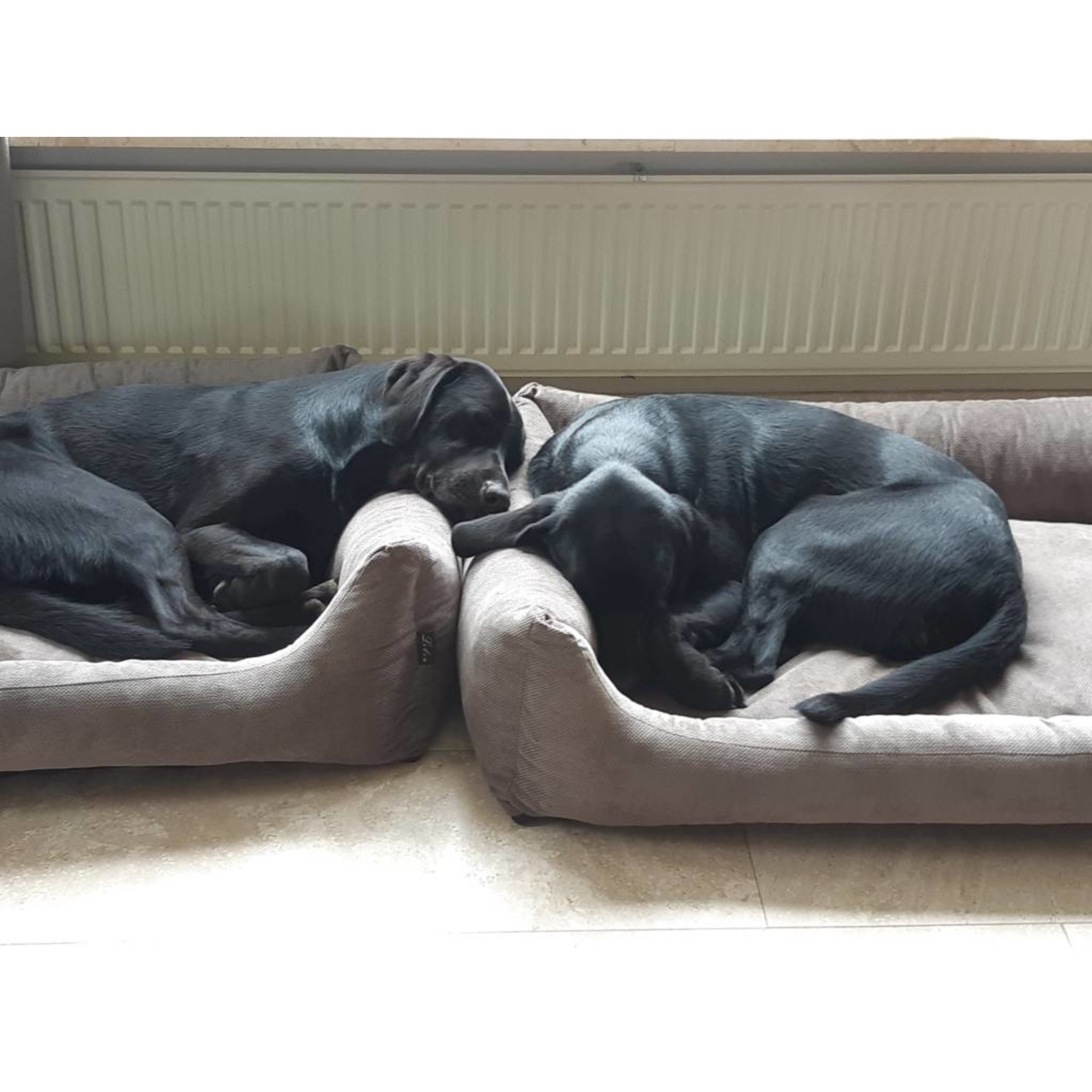 Hondenmand Gordon 120 cm