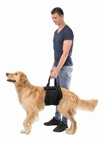 Tilhulp voor honden