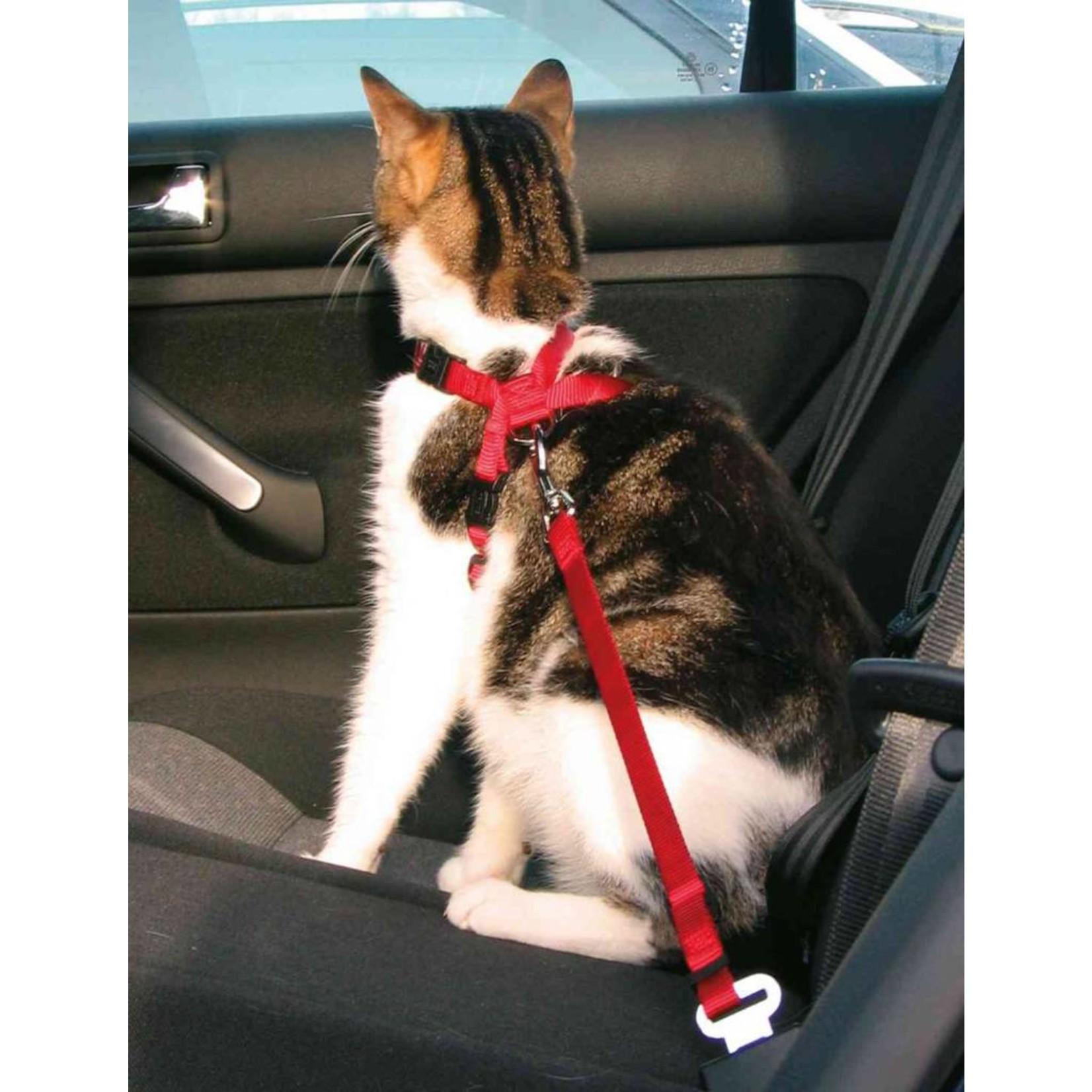 Auto tuig voor kleine honden of katten
