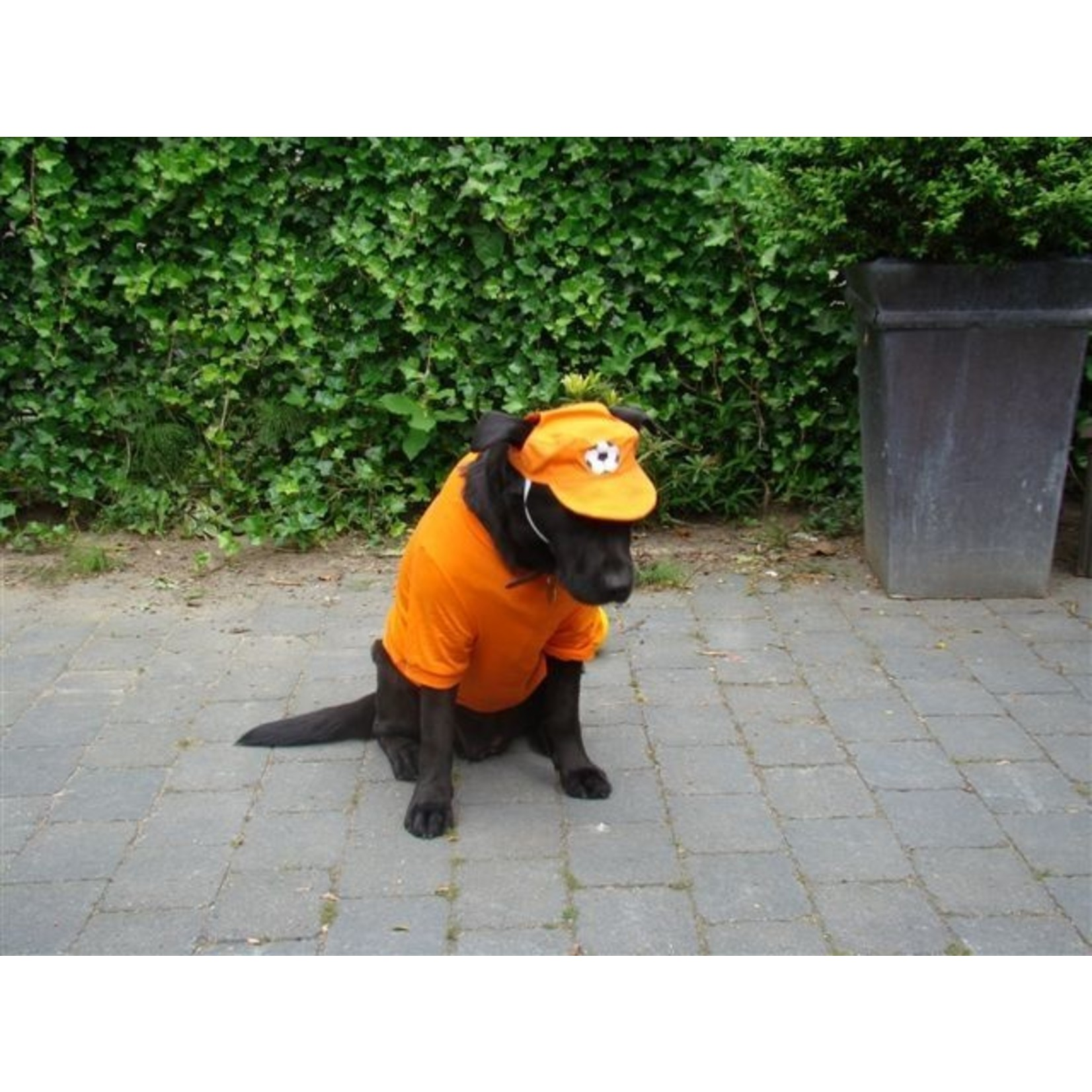 Honden EK Petje