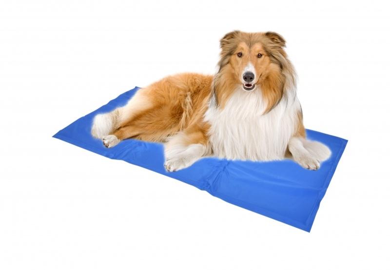 Koelmat voor honden 60x80 cm