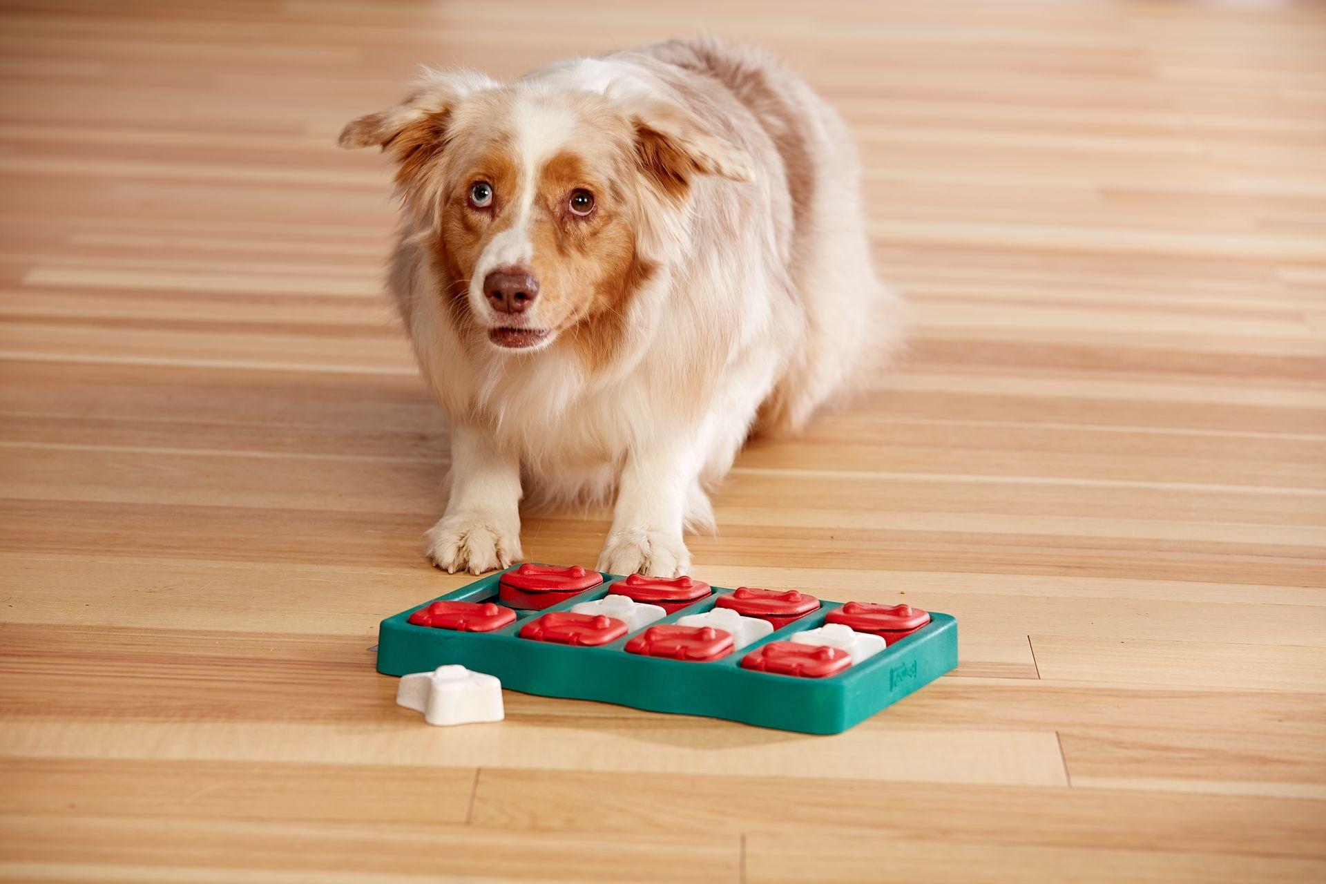 Intelligentiespel Dog Brick by Nina Ottoson