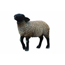 Collecta Collecta Suffolk schaap