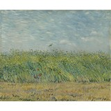 Wheatfield with Partridge